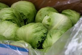 can guinea pigs eat iceberg lettuce